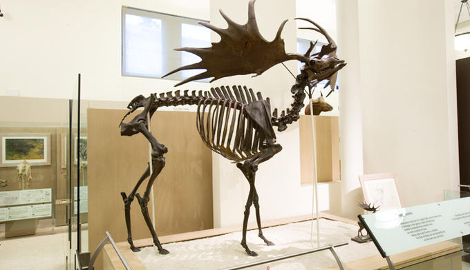 irish-elk_dynamic_lead_hero_image