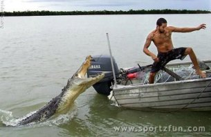 alligator-attack