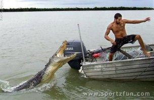 alligator-attack